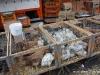 Nochmal Markt, aber in Charleroi