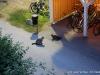 Katzenansammlungen